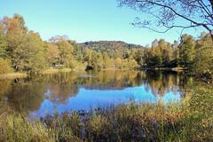 Queen Elizabeth Forest Park (mcgin's dad) Tags: aberfoyle queenelizabethforestpark canoneosm