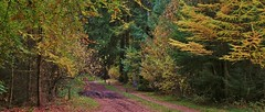 Anserpad - Dwingelderveld (henkmulder887) Tags: panorama nature landscape nikon natur herfst natuur natura ruinen natuurmonumenten ansen fkp dwingeloo dwingelderveld fietsknooppunt anserpad