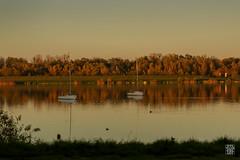 2015-11-01_Q8B4001 © Sylvain Collet.jpg (sylvain.collet) Tags: autumn france nature automne sur marne vairessurmarne vaires