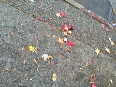2015 YIP - Day 293: Random sidewalk shot (knoopie) Tags: october picturemail iphone day293 2015 project365 365project 2015yip 2015365 yiipday293