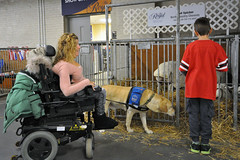 RAWF15 RWintle aDSC_0186 (RoyalPhotographyTeam) Tags: dog toronto ontario canada child sheep wheelchair servicedog accessibility exhibitionplace royalagriculturalwinterfair rawf mobilitydevice royal15 rawf15