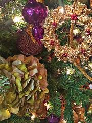 Tis the Season (EDWW day_dae (esteemedhelga)) Tags: santa christmas xmas holiday snow stockings st bells festive reindeer snowflakes snowman globe poinsettia illuminations garland holly scrooge nicholas elf wreath evergreen ornaments angels tinsel icicle manger yule santaclaus mistletoe nutcracker cheer jolly christmastrees happyholidays bethlehem merrychristmas bauble rejoice goodwill partridge elves yuletide caroling holidayseason carolers seasongreetings merrifieldgardencenter edww christchild daydae esteemedhelga jesus hohoho gingerbread wrappingpaper giftgiving joyeuxnoel northpole holidaydecornativity sleighride artificialtree candycane feliznavidadfrostythesnowman kriskringle sleighbells stockingstuffer wisemen twelvedaysofchristmas winterwonderland
