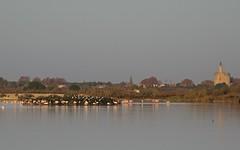 Flamant rose - Aigues Mortes - IMG_4113 (6franc6) Tags: 30 novembre rando languedoc gard 2015 petitecamargue vélo 6franc6