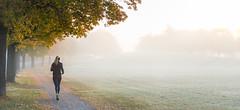Uppsala, October 17, 2015 (Ulf Bodin) Tags: autumn panorama woman mist tree girl fog sunrise landscape se early october sweden outdoor path running uppsala sverige fitness runner höst träd dimma kvinna uppsalalän löpare canoneos5dmarkiii canonef70200mmf28lisiiusm