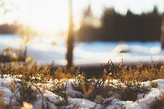 (DrowsyPotato) Tags: trees winter sunset plants sunlight snow ice water zeiss lens december sweden bokeh sony sunsets 55mm carl 100 mm fe f18 za a7 jmtland lenses norrland 550 11600 18 ilce7