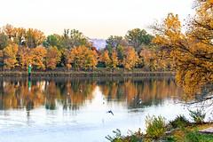 L'automne (yann.dimauro) Tags: france fr rhnealpes givors