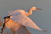 Little Egret - Kalochori (MoGoutz) Tags: little egret egretta garzetta kalochori