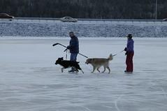 _TRW7494 Ice Skating Twin Lakes (terrificphotos) Tags: juneauaalaska twinlakes dogs frost trees raven evergreen icecrystals hockey