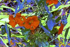 Flora Abstract! (maginoz1) Tags: abstract art manipulate flowers flora summer december 2016 bullarosegarden melbourne victoria australia canon g3x