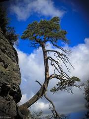 Sachsen (hibf_2004) Tags: bastei urlaub2016 felsen himmel blau himmelblau wolken canon sachsen elbsandsteingebirge baum baumkrone canonpowershots100 canonpowershot powershot s100 outdoor wandern urlaub 2016