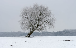 Frozen Trees 6