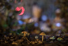 IMG_7193 (::Lens a Lot::) Tags: paris   2016 carl zeiss planar 50mm ƒ14 t✮ aej mid 70's 6 blades iris cy mount f14 street photography color bokeh water drop depth field vintage manual fixed length prime german lens night light flower flare carlzeiss profondeur de champ mushroom close up macro