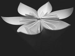 white flower (--StadtKind--) Tags: noiretblanc schwarzweiss noireetblanc bw blackandwhite mono monochrome flower fleur flores blume blüte petal ilford1600 vsco olympusem10markii olympusm124028pro getolympus olymusomd omd mft microfourthirds stadtkind kempten bavaria germany
