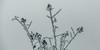 rauhreif 6474 (s.alt) Tags: frost detail frozen eiskristall icecrystal frozennature nature natureunveiled winter ice rauhreif cold kalt morgen kristallförmig vereist niederschlag hoarfrost whitefrost rime frostyrime silhouette macro minimalism minimal