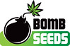 Buy Bomb Seeds - THC Bomb - Brighton, East Sussex (vapecartelbrighton) Tags: vape cartel seeds cannabis delicious royal queen headshop brighton sussex east london road purchase vapour vaporizers smoke hemp raw humboldt bulldog souvenir popular novelty skunkworks skunk weed world barneys farm dinafem thc bomb big buddha female auto automatic feminised seedbank strain indica sativa chronic cheese critical hempworks