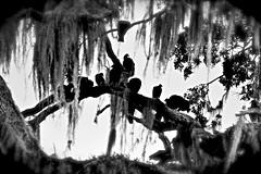 Vultures (donjuanmon) Tags: sliders slidersunday hss donjuanmon vulture