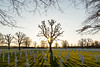 Cemetery (genf) Tags: cemetery begraafplaats war oorlog oorlogsbegraafplaats margraten limburg crosses kruisen tree boom sun zon tegenlicht backlight grass gras meadow sony a77