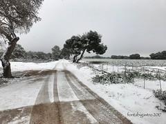 Imagen insólita en nuestra zona. @MeteOrihuela #LasRamblas #Campoamor #Nieve #DayToDay2017 (fonta bigastro) Tags: lasramblas campoamor nieve daytoday2017