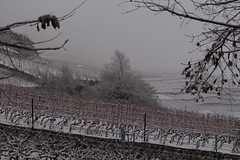 hiver (bulbocode909) Tags: valais suisse fully hiver neige vignes arbres nature brouillard branches