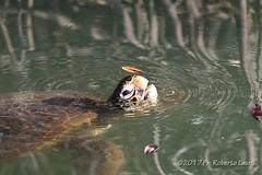 Breath (Roberto Lauro) Tags: viaggi travel galapagos ecuador wildlife tartaruga tortoise canon natura nature animali