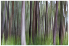 The woods (JakaPH Photography) Tags: landscape abstract tree woods forest bush trees colour color movement motion blur panning vertical woodland day daylight