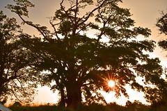 Port Vila Vanuatu (modsseny) Tags: banyantree sunset portvila vanuatu