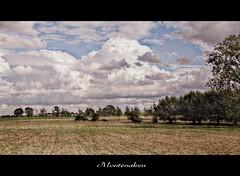 Summertime (patrick.verstappen) Tags: hdr montenaken photo picassa pinterest pat picmonkey ipernity ipiccy field limburg belgium sigma d7100 summer cloudy clouds flickr facebook nikon