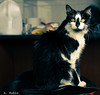 08032017-DSC_6404 (Fabian.Rubio) Tags: independencia santiago chile gatos gatita mascotas pets catlovers