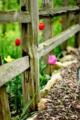 A Garden for Everyone III (Mingfong) Tags: summer story albumcover stories summerflower summerflowers  summercolors mingfong bokehsonicejuly bokehsonicejuly04 musicflyer mingfongjan artbrochure sketchoflight mingfongphotography