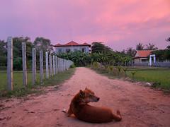 bonita tarde, no? (subcomandanta) Tags: light sunset sky luz atardecer cambodia cielo miradas camboya mrdquemiras lfsperroscallejeros