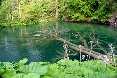Plitvice Lakes (Amauri Aguiar) Tags: fish waterfall nationalpark lakes croatia lagos peixe cachoeira plitvice parquenacional crocia