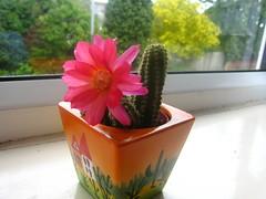 Cactus (Zuzumangoo) Tags: cactus cactusflower