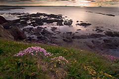 Sunset over the Bass Rock (tomgardner) Tags: flowers sunset sea 15fav coast scotland wideangle dunbar lothian bassrock seapink berwicklaw