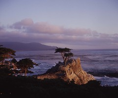 Lone Cypress, Monterey, California 2005 (artandscience) Tags: california rolleiflex monterey pebblebeach lonecypress 17miledrive montereycypress cupressusmacrocarpa