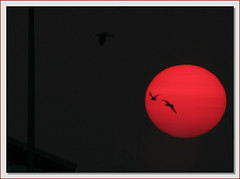 Sun birds (Java Cafe) Tags: sunset sky sun bird nature silhouette skyscape landscape flying interestingness twilight bravo florida top20sunrisesunset dusk seagull gull 100v10f 500v50f birdsinflight topf200 f200 400mm interestingness4 magicdonkey 9999v99f 1500v60f bronly specnature 14xtc 3000v120f fivestarsgallery exploretop20 explore23jun06 abigfave superbmasterpiece diamondclassphotographer flickrdiamond frhwofavs