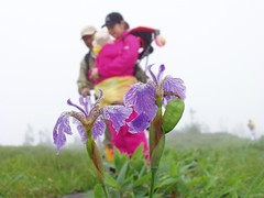 iris whilst hiking in oze (michenv) Tags: flowers iris mist mountains flower 2004 japan digital asia hiking michelle olympus wetlands nippon digitalcamera  orient camedia nihon oze digitalphotos digitalphotography olympuscamedia camediaseries  olympusdigital olympusc50z   michenv olympusx2 michenv2004  ozegahara