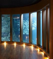 "la sala ""nautilus"" del aquarium finisterrae en A Corua (briveira) Tags: pez sepia aquarium corua peces octopus medusa acuario pulpo finisterrae fosiles fsiles trilobites briveiracom"