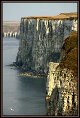 Vertical Drop (Mike Carter) Tags: sea seascape bird landscape coast yorkshire side watching cliffs east bempton fcsea