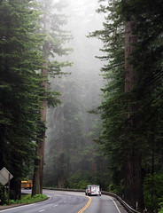 California Road (flopper) Tags: california road fog forest redwood schoolbus onabus flopper interestingness25 interestingness41 i500 specnature p1f1 explore1sep2006 2mostinterestingphotowithtagredwoodasof09182006 explore18oct2006 interestingess35 explore19oct2006
