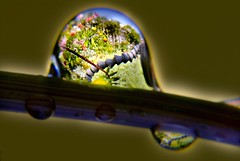 McClamp Bubble (Harold Davis) Tags: waterdrop harolddavis metaphoto waterdrops thestick mcclamp