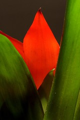 (*haibar) Tags: red flower green ef5018 haibar ef80f18