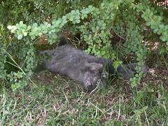 Mika is having a rest under the tree (Levana's Cats =^..^=) Tags: pet cats pets love beautiful beauty animal cat wonderful garden persian nice feline kiss funny pretty great kitty best kitties felines lovely tickle top20cats