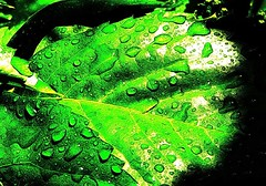 (jo.vanka) Tags: green drops ogt