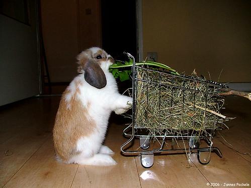 Bis 23Uhr Shoppen- beim Midnight Shopping ©jpockele/flickr.com