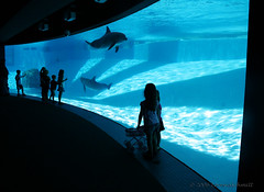 Aquarium (LorenaSchmitt) Tags: blue water animal azul aquarium agua texas dolphin planet delfin delfines