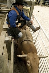 report on rodeo (ian-*-) Tags: horse france cowboys bareback cowboy bull riding rodeo cowgirl saddle bronc ardeche irca equiblues
