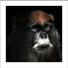Pensiveness* (Imapix) Tags: voyage travel portrait canada art nature animal canon photography monkey photo bravo foto photographie image quebec quality character ancestor qubec singe imapix pensiven