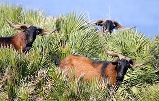 Spain Ibex Hunt & Driven Partridge Hunts 66