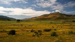 IMG_4308 (francois f swanepoel) Tags: karoo wupperthal noordkaap namakwaland nieuwoudtville joedevilliers