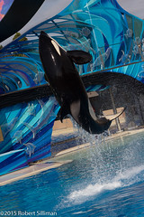 Shamu show-9632 (rob-the-org) Tags: iso100 noflash f90 orca seaworld uncropped shamu sandiegoca 1320sec 87mm 18250mm